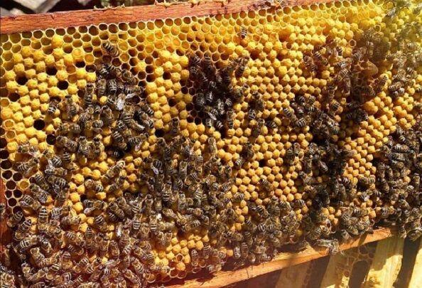 خشکسالی عامل کاهش تولید عسل در آبدانان شد