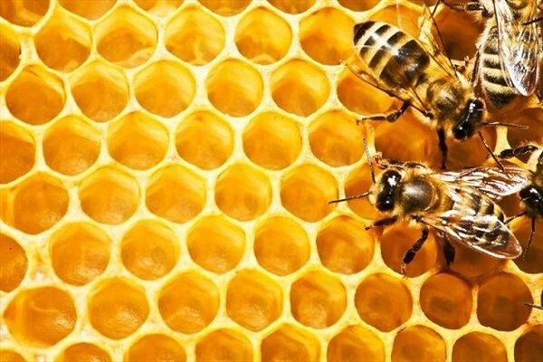 پیش بینی تولید ۳ هزار و ۴۸۵ تُن عسل در استان همدان