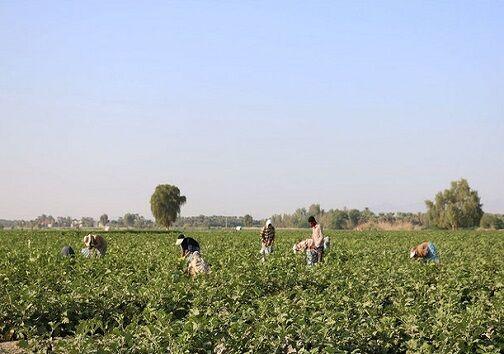 کشاورزی در گلستان توجیه اقتصادی ندارد| مافیای سد عامل بحران آب