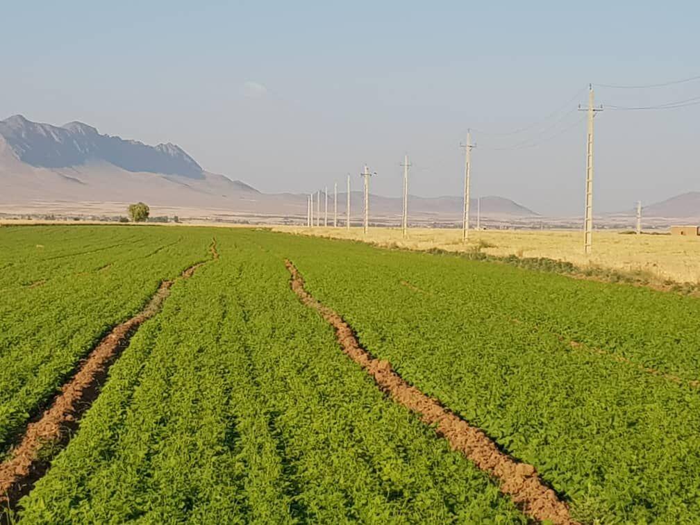 صرفه جویی ۵۰ درصدی در مصرف بذر لوبیا با ماشین بذرکار| رویش ۹۰درصدی بذر با بکارگیری ماشین کاشت مستقیم