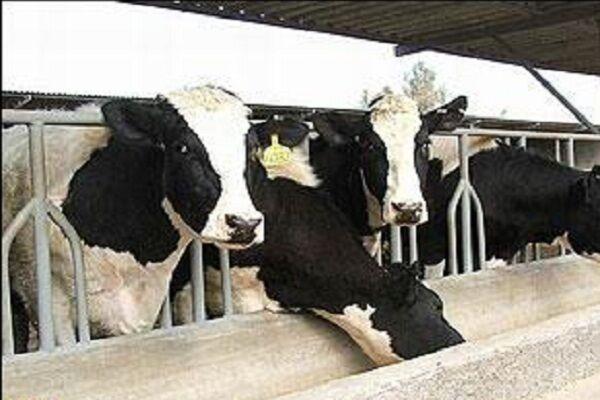 بانک ها متهم مانع تراشی در صنعت دامداری و کشاورزی؛ تسهیلات به دست دامدار نمیرسد