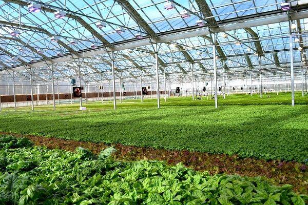 توسعه گلخانهها راهکار حفظ اشتغال در بخش کشاورزی چهار محال و بختیاری است
