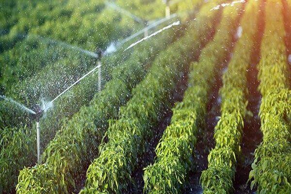 تولید محصولات باغی و زراعی در چهارمحال و بختیاری ۳۰ درصد کاهش یافت