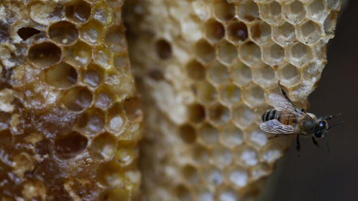 وفور عرضه عسل تقلبی در بازار همدان| صنعت زنبورداری در معرض تهدید است