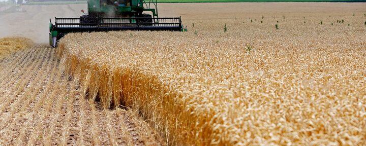 کاهش تولید گندم در مازندران/ «خصوصیسازیها» خصولتی شد