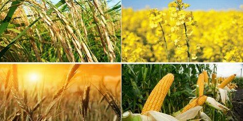 طرح تقویت امنیت غذایی، جامعیت ندارد