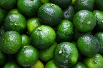 نوبرانه های سبز در بازار| دلالان سوگلی باغات را رنگ می کنند