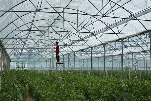 فناوری گلخانه ای در سال ۲۰۲۱ | افزایش بهره وری با حداقل نیروی کار