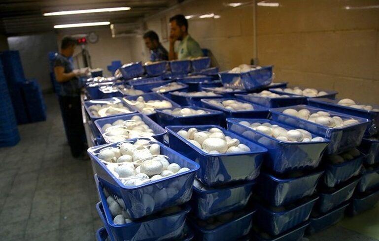 احیای یک واحد تولیدی ورشکسته در همدان  ماهانه ۱۴۰ تن قارچ صادر میشود