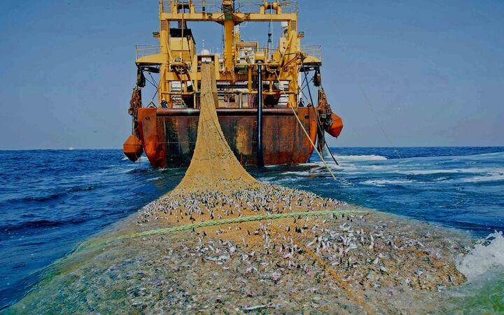 صید با شناورهای فرسوده در خزر| کیلکای مازندران در تور کشورهای همسایه