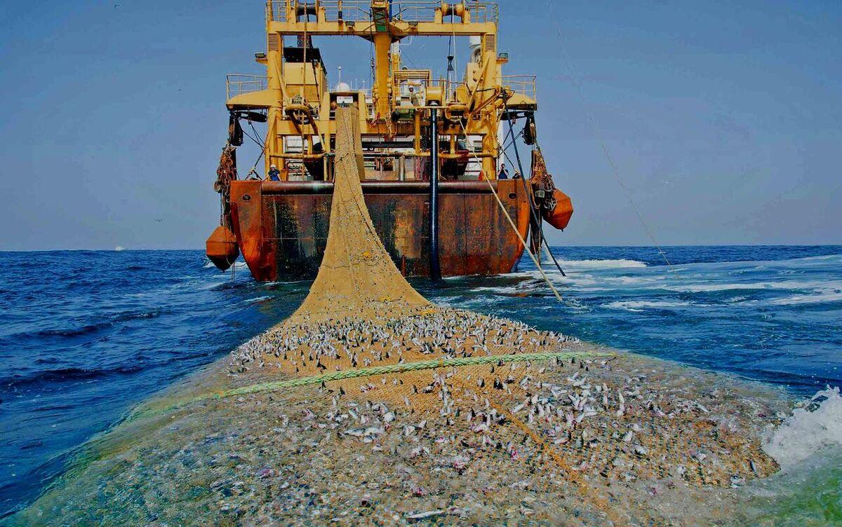 شناورهای صید ترال به نفع سازمان کاشف ضبط میشود