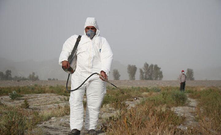 پیش بینی مبارزه با ملخ صحرایی در سطح حدود ۸۰ هزار هکتار