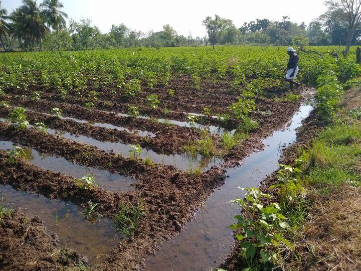دنیا در مسیر بهینه سازی منابع آب کشاورزی؛ به کارگیری هوش مصنوعی در پردازش رفتار گیاه