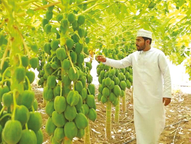 کشاورزی در عمان؛ توسعه فناوریهای پیشرفته و سیاستهای حمایتی دولت| خودکفایی در تولید محصولات داخلی
