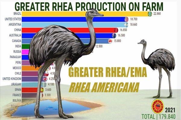 بزرگترین پرورش دهندگان شترمرغ استرالیایی کدامند؟